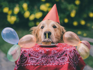 Фото ко дню собак