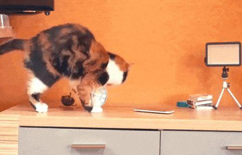 Гифки с котами и кошками