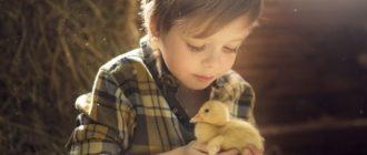 Все о животных для детей