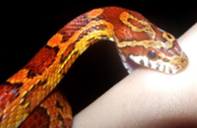 Первая помощь при укусах змеи