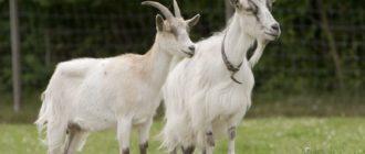 Какие бывают козы