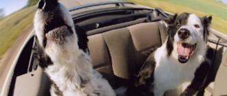 Как путешествовать с домашними животными в автомобиле